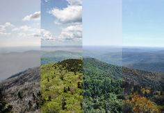Great way to show all four seasons of a certain place
