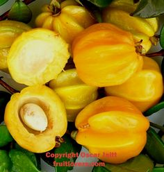 Pitangatuba: Rare Fruit Seeds and Exotic Tropical Fruit Seeds