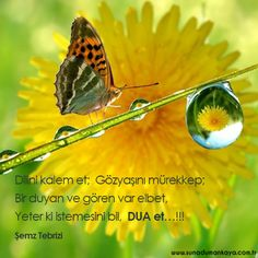 Jiddu Krishnamurti, Moth, Insects, Animation, Animals, Inspiration, Colorful, Signs, Frases