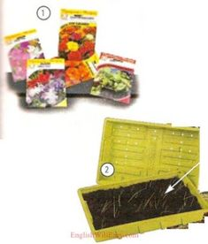 1. seeds 2. seedling tray Photo Dictionary, Dictionary For Kids, Paint Thinner, Yard Waste, Electrical Tape, Grass Seed, Work Gloves, Gardening Gloves, Wheelbarrow