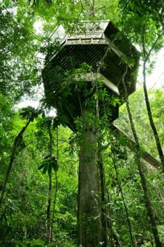 Damn Cool Pictures: Finca Bellavista: Incredible Tree House Community in Costa Rica Cool Tree Houses, Fairy Houses, Play Houses, Costa Rica, Bungalow, Unusual Homes, Tree Tops, In The Tree, Architecture Details
