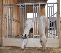 Sicherheits Durchfressgitter für Pferde