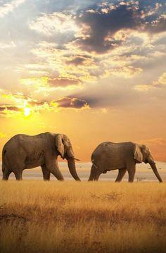 Elephant brother