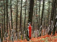 Arte y naturaleza. Obra de Agustín Ibarrola, utilizando la naturaleza como soporte. Bosque de Oma (Bizkaia).