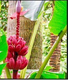 Tropical Fruits, Flowers, Plants, Plant, Royal Icing Flowers, Flower, Florals, Floral, Planets