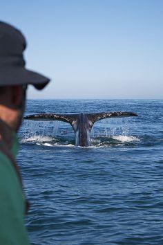 Chase the whale - Guerrero Negro, Baja California Sur (México)