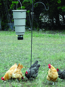 Chickens enjoy foraging for their food and this economical time-release feeder offers an easy solution when there is less foraging material . Backyard Poultry, Chickens Backyard, Chicken Feeders, Guinea Fowl, Chickens And Roosters, Raising Chickens, Coops, Farm Animals, Pet Care
