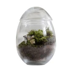 I pinned this Male Picture That Ready-Made Terrarium from the Twig Terrariums event at Joss and Main!