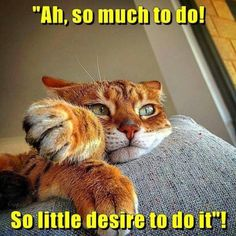 Lolcats caffeine lol at funny cat memes funny cat pictures Funny Animal Memes, Funny Animals, Cute Animals, Funny Memes, Animals Images, Cat Quotes, Grumpy Cat, Funny Animal Pictures, Animal Pics