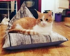 Beanbag for cats Bean Bag, Cats, Happy, How To Make, Animals, Tomy, Pet Dogs, Handmade, Gatos