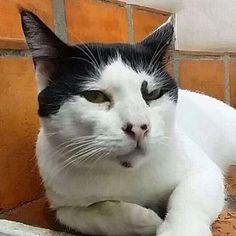 Passando por aqui só pra te desafiar a resistir ao meu charme.  E aí? Me leva pra sua casinha? #miaudota #chamosodemais #olharmatador --------------------------------------------------- www.catland.org.br www.catlandlojinha.com.br  catlandrescue@gmail.com --------------------------------------------------- #catland #gocatland #catlandrescue #instacats #catlovers #catsofinstagram #catoftheday #ilovecats #adote #adotenãocompre