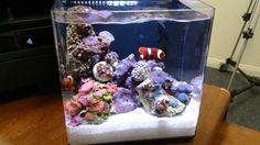 pico saltwater tanks - Google Search