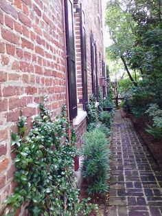 Charleston and some of its charm~Conchetta