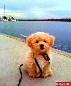 Top 10 Most Lovable Dogs in the World. MY puppy looks like this!!!!! she is soooo cute! ___ Dogs Lover?? Visit our website now! :-)