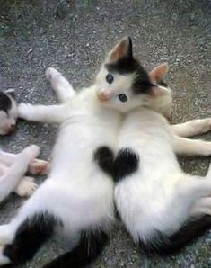 Kitties and Hearts  can i hear an awwww......