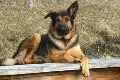 Dog Wallpaper, Best Friend, Hd Wallpapers, Dog Eyes, Pets, 1484×987