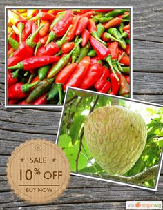 10% OFF on select products. Hurry, sale ending soon! Check out our discounted products now: https://orangetwig.com/shops/AAAibxW/campaigns/AABufU4?cb=2015012&sn=CaribbeanGarden&ch=pin&crid=AABue0B