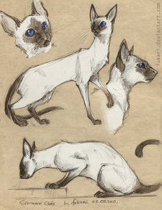 Animal Sketches, Animal Drawings, Siamese Cats, Cats And Kittens, Sphynx Cat, Cat Anatomy, Warrior Cats Fan Art, Son Chat, Cat Sketch