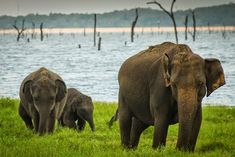 Where Is the Best Place in Sri Lanka to See Elephants?