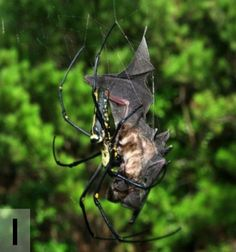 This Collection of Bat-Eating Spiders Is Probably the Scariest Thing You'll See Today