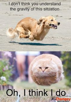understand gravity cat dog