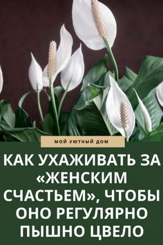 Peace Lily, Good Advice, Embroidery Designs, Indoor House Plants, Lawn And Garden, Lifehacks, Quality Quotes