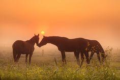 Horses of Love........ by Betuwefotograaf