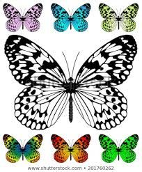 Butterfly vector template with samples. Paper Kite and Rice Paper butterfly, Idea Leuconoe species. Butterfly Mandala, Butterfly Clip Art, Butterfly Images, Butterfly Drawing, Butterfly Template, Butterfly Crafts, Butterfly Pattern, Butterfly Wings, Butterfly Design