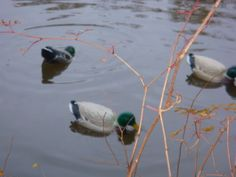 Motion duck decoy idea - Texas Waterfowler Forums