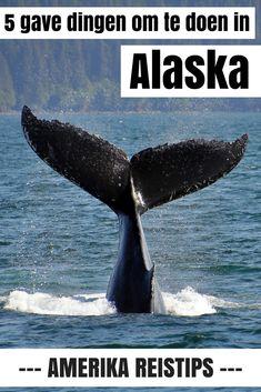 5 Super gave (en koude) dingen om te doen in Alaska. Van een flightseeing over een gletsjer tot walvissen kijken en kamperen bij een ijsbergenmeer - lees mijn tips en laat je inspireren over een droomreis naar Alaska!  #alaska #travelalaska