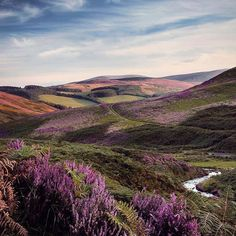 If you think hills are green then you've never been to Scotland! @goodbye.1979 has photographed the view from White Meldon where the heather is in full bloom! #ScottishBorders #heather #hills #landscape #Scotland #VisitScotland #LoveScotland #ScotSpirit