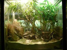 terrarium | Common Chameleon terrarium inside the Vivarium » Jardin des Plantes ...