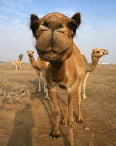 Camelo: a cor do meu inverno 2015