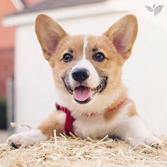 No day is complete without a photo of a happy healthy pooch! #ThinkBeyond via @casper.the.corgi