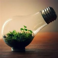 Why limit your mini-terrarium output to plain old jars? You can reuse a burned out light bulb to create a smaller, desk-friendly nature space. Light Bulb Jar, Light Bulb Terrarium, Cute Diys, Cute Crafts, Diy Crafts, Sharpie Crafts, Terrariums, Terrarium Ideas, Mini Terrarium