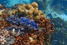 Pulau Perhentian Kecil - Kuala Besut, Malaysia | AFAR.com
