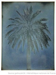 Athènes. 1842. Palmier près [Eglise des] S[aints] Théodore[s]. 89 : [photographie] / Joseph Philibert Girault de Prangey - 1