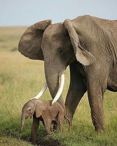 I love this beautiful creatures. .!! From : @daily_elephant.lovers - - . . For info about promoting your elephant art or crafts send me a direct message @elephant.gifts or email elephantgifts@outlook.com . Follow @elephant.gifts for beautiful and inspiring elephant images and videos every day! . #elephant #elephants #elephantlove