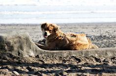 Bali Beach, Dog Beach, Strand, Dogs, Animals, Pet Dogs, Bali, Animales, Animaux