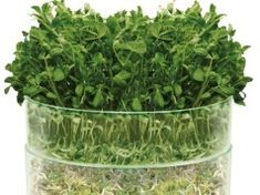 New vegetable seeds for my choice Growing Vegetables, Fruits And Vegetables, Trays, Seeds, Posts, Garden, Blog, Messages, Garten