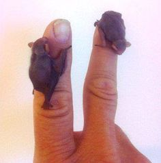 Tiny baby bats. I want one!