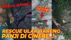 RESCUE ULAR DI CINERE BARENG PANJI..! SEMUA PANIK....!!   feat. Panji Pe... Trends, Popular, Movie Posters, Instagram, Film Poster, Popular Pins, Billboard, Film Posters, Beauty Trends