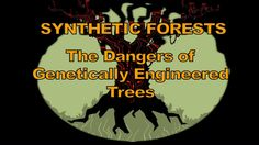 The Dangers of GMO Trees(Video)