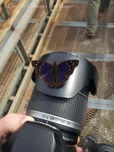 Butterflies in Argentina, they love the camera! http://creation-colours.blogspot.com.au