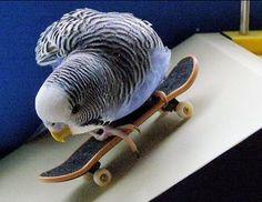 Obrázek z: http://www.svetu.cz/blog/ftp/andulky/skate.jpg.