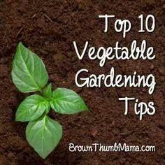Top 10 gardening tips