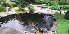 Inilah 7 Ide Desain kolam Ikan Minimalis Batu Alam | Pesona Rumah