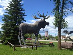 """See 9 photos and 2 tips from 294 visitors to Dryden, Ontario. """"we're coming to you, thunder bay! Dryden Ontario, The Province, Summer Travel, Four Square, Places Ive Been, Beautiful Places, Coast, Canada, Writing"""