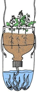 In this investigation, learners plant seeds in a 2-liter bottle filled with soil that is connected to a water source below. Over the next few weeks, learners observe how the plants grow. The investigation is open-ended, with suggestions for variables to change and indicators to measure, such as pH of the soil and water. Instructions are given for performing a salt pollution experiment as one possibility. The activity comes from a printed book that is also available in Spanish, though the ...