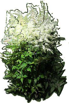Astilbe japonica Deutschland Puzzle, Plants, See Through, Puzzles, Riddles, Planters, Jigsaw Puzzles, Plant
